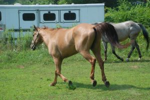 QH 2 by Spotstock