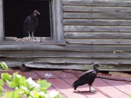 vultures and squatters by photom17