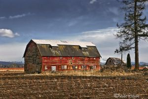 The Old Barn by Violet-Kleinert