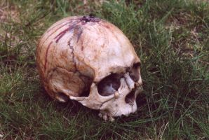 skull2-arsenal-greenfeed by arsenal-greenfeed