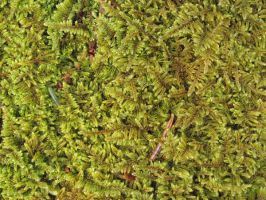 moss by LuckyStock