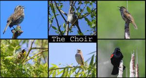 The Choir by swashbuckler