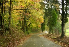 Country Lane in Fall by photowizard