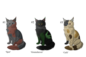 Fluffy Kitty Adopts - Adopted by Feralx1
