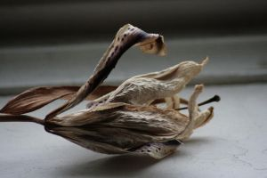 Dried Orchid 1 by sd-stock