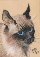 Portrait of a Siamese by robertsloan2