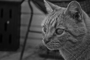 Cat Up Close by AppareilPhotoGarcon