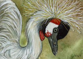 ACEO Grey Crowned Crane by sschukina