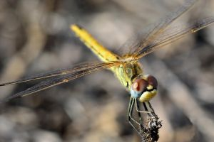 Today I saw the dragon fly... by cricketumpire