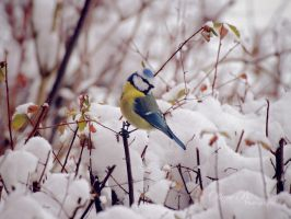 Colors in the snow by OliverBPhotography