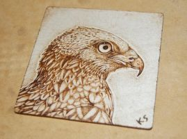 Red Kite Pyrography by BlueMidna