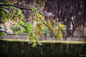 Pouring by lisajlangrish