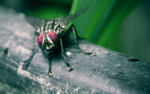 the little fly that could by blackasmodeus
