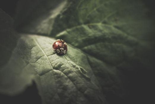 ..: A morning on a radish leaf :.. by Mademoiselle-P