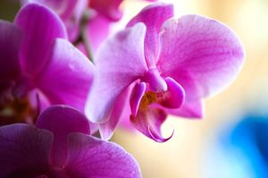 Orchids by AndersonPhotography