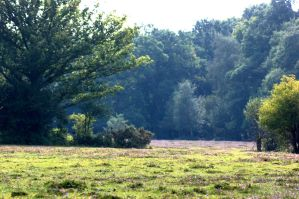 New Forest Backgrounds stk by LubelleCreativeSpark