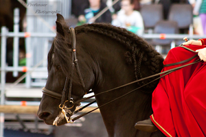 Sidesaddle Friesian_17 by CalyHoney