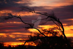 Tucson Sunset C3183 by mammothhunter