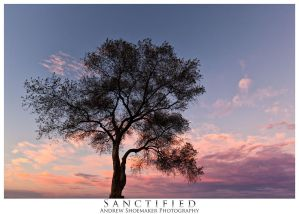 Sactified by AndrewShoemaker