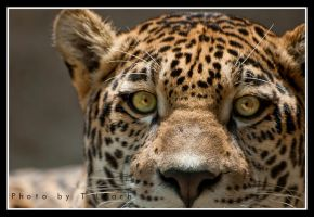 Eyes On Me by tleach0608