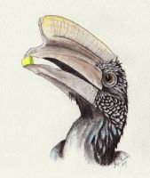 It's Mr. Hornbill Again by Eurwentala