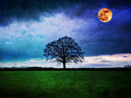 Moonglow by rhb4