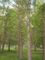 Mississippi Trees by maggiemaelately