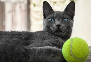 Tennis Cat by MixMyPhotoshop