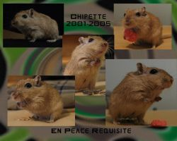 A gerbil's remembrance by dproberts
