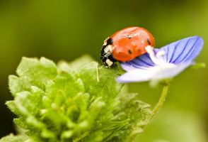 Lady bug II by ervin21