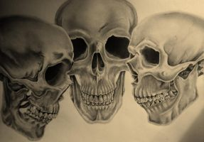 Study of the Skull by RHCPBayBay11417