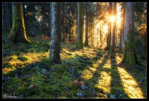 Golden Eve by FlorentCourty