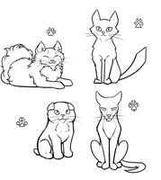 Cat Character Design Doodles by Pandadrake