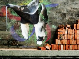 """""""Abstract"""" Anteater by CaptainDrizzle"""