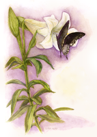 Easter Lily commission by matildarose