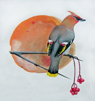 Waxwing by StoneTheCrow87