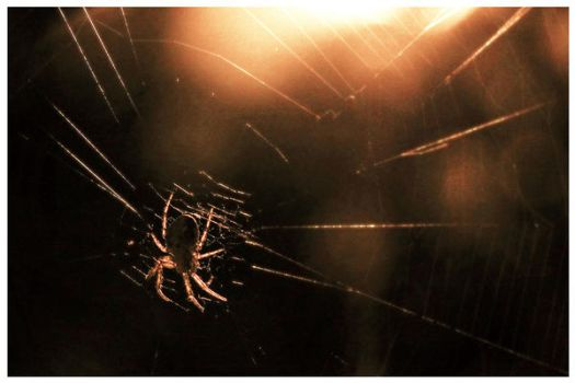 The spider in my window by feawen