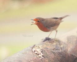 Christmas Robin by FreyaPhotos
