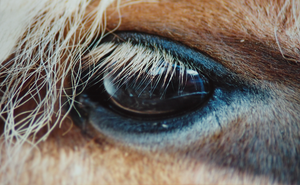 Trough the Eyes of a Horse by whensummerends