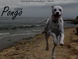 pongo by RemorseHP