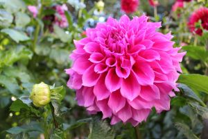 Pink Honeycomb flower by N-ScapePhotography
