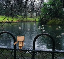 Between him and the ducks.. by Profail