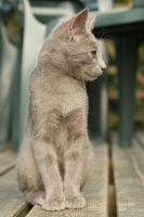 Cat Stock 096 by Malleni-Stock