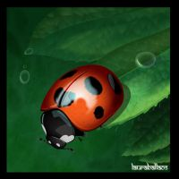 Ladybug by LauraNonCe