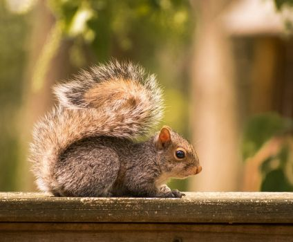 Baby Squirrel by hboersphoto