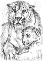 Smilodon prelim sketch by balaa