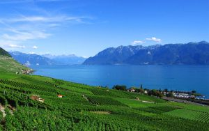 Lavaux by nocloud