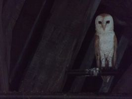 Owl by GriffinPhillis