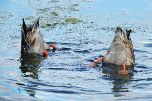 Tails of Linlithgow 1 by wildplaces