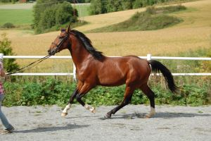 horse stock 35 by Ulvar-Stock